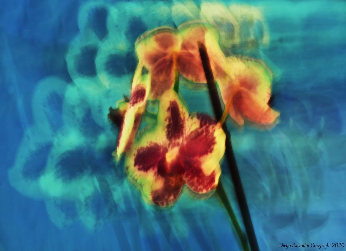 2012-Futurist-flower 1- Diego-Salvador