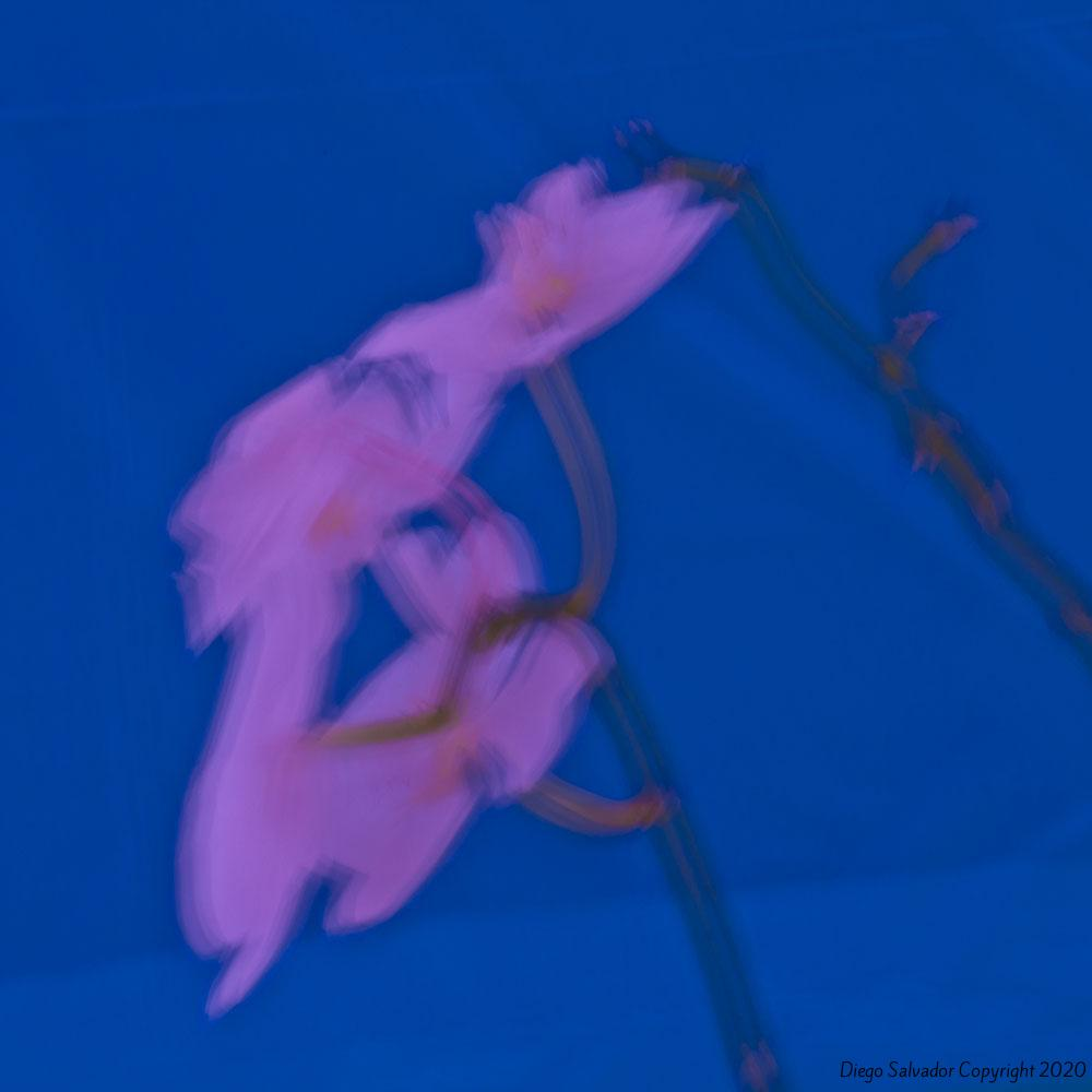 2012 - Futurist flower 13 - Diego Salvador