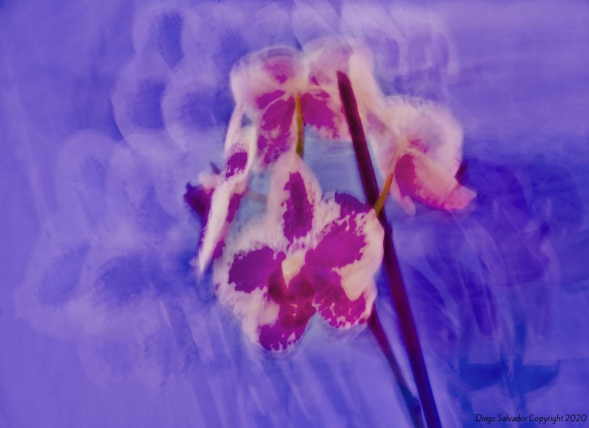 2012 - Futurist Flowers 2 - Diego Salvador