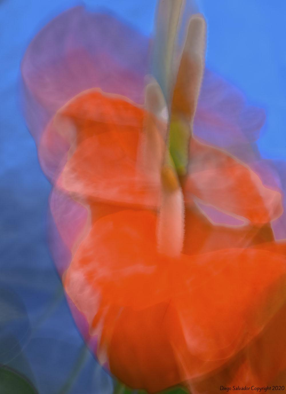2012 - Futurist Flower 4 - Diego Salvador