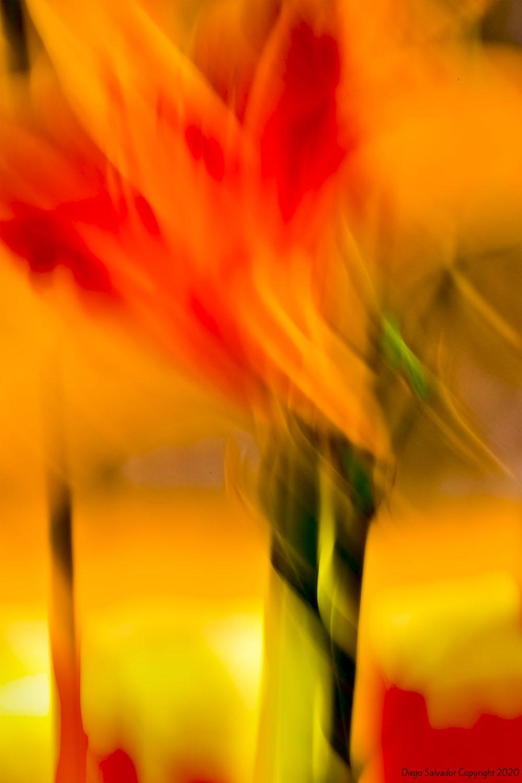 2012 - Futurist flower 8 - Diego Salvador