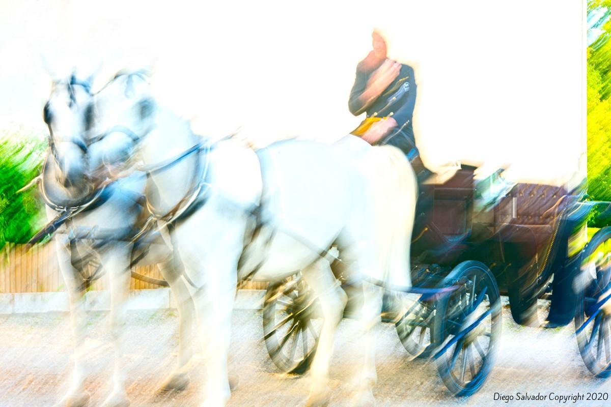 2014 - Eleganthorse11 - Diego Salvador