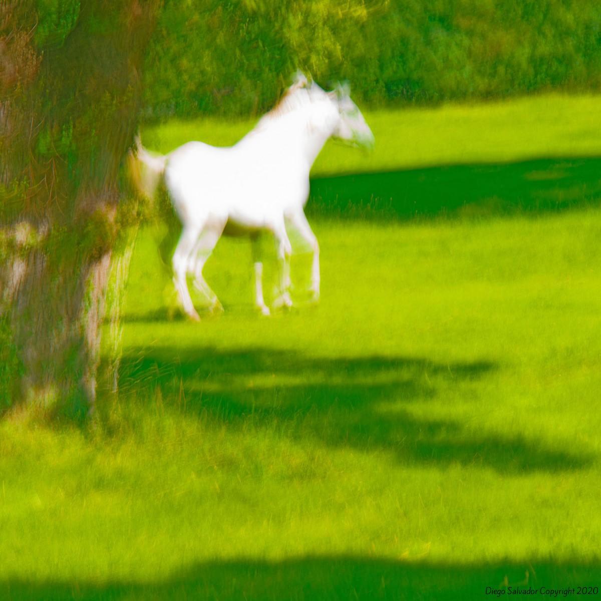 2014 - Eleganthorse2 - Diego Salvador