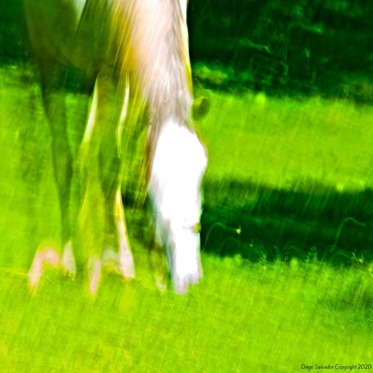 2014 - Eleganthorse3 - Diego Salvador