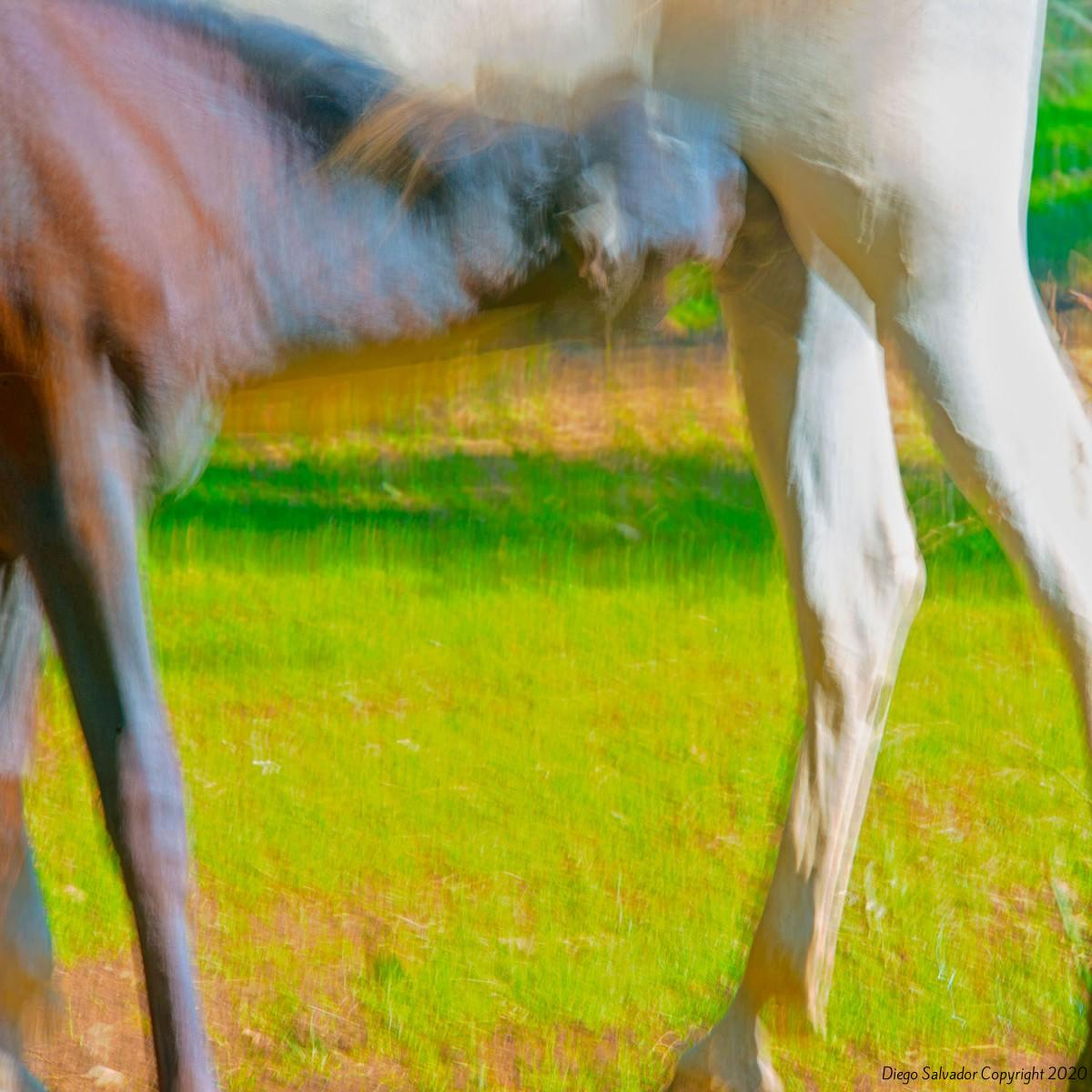 2014 - Eleganthorse4 - Diego Salvador
