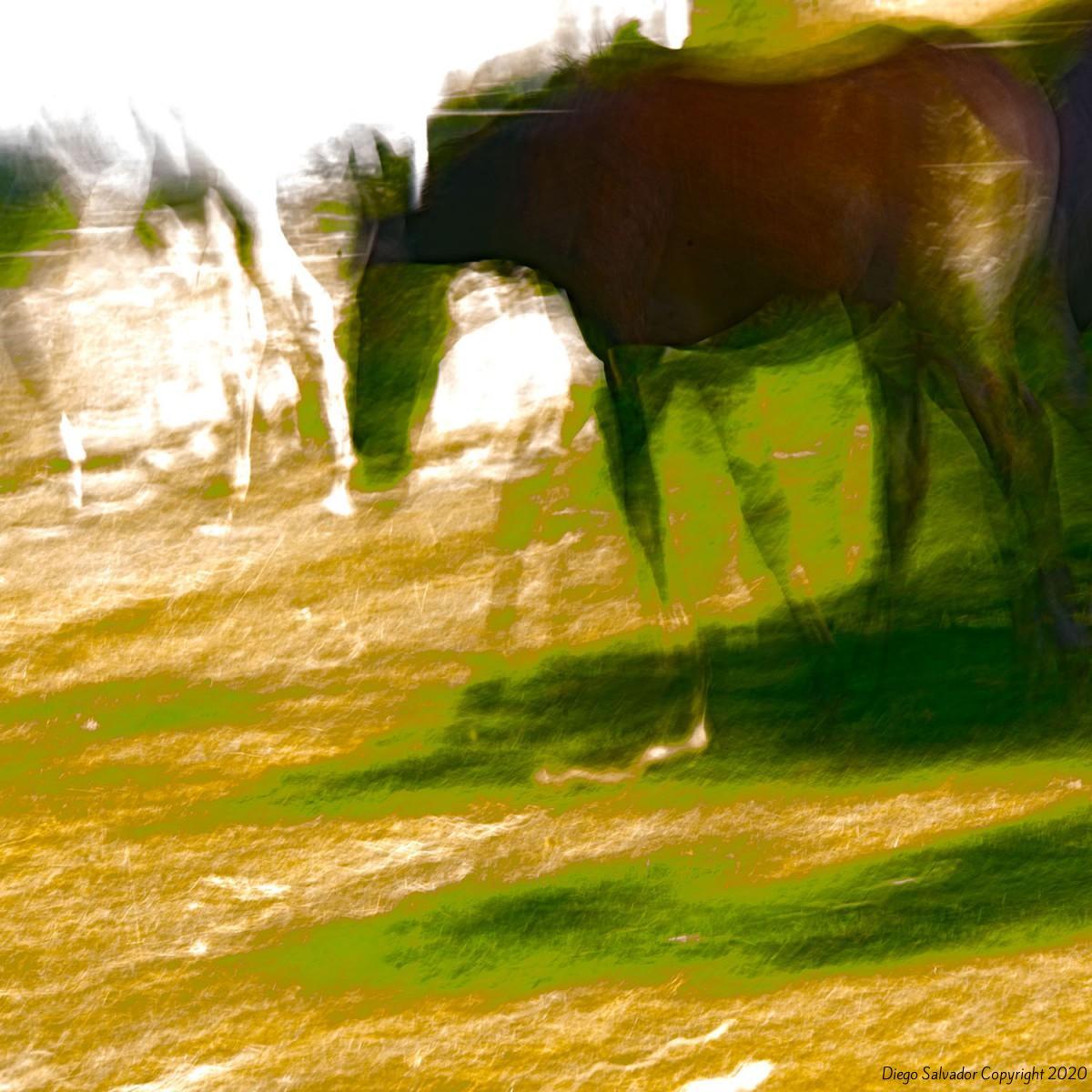 2014 - Eleganthorse5 - Diego Salvador