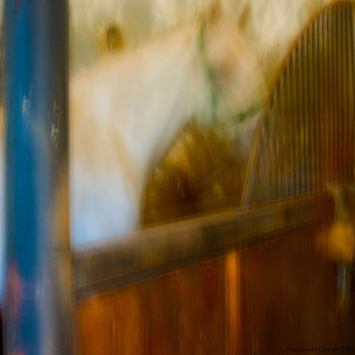 2014 - Eleganthorse9 - Diego Salvador