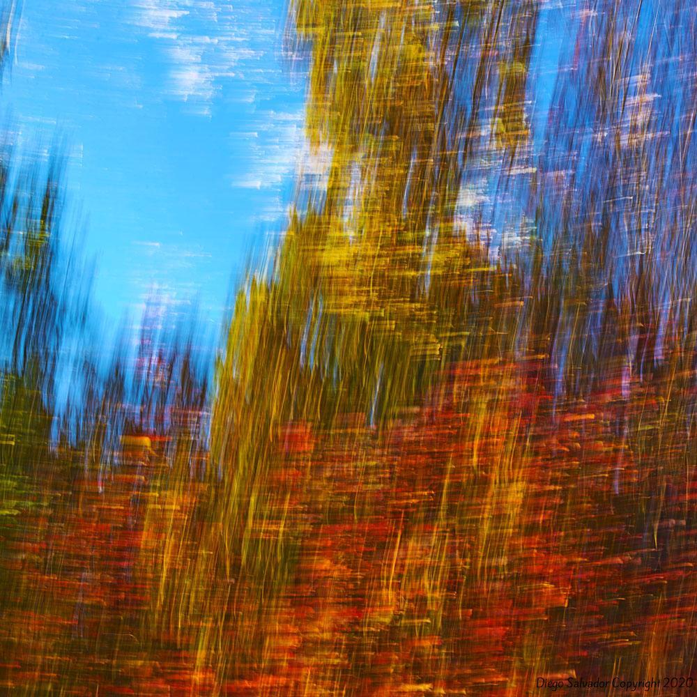 2015 - Fall's colors 11 - Diego Salvador