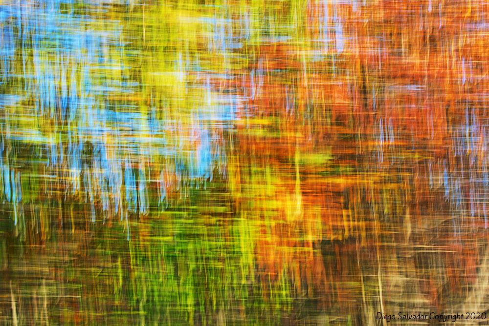 2015 - Fall's colors 2 - Diego Salvador