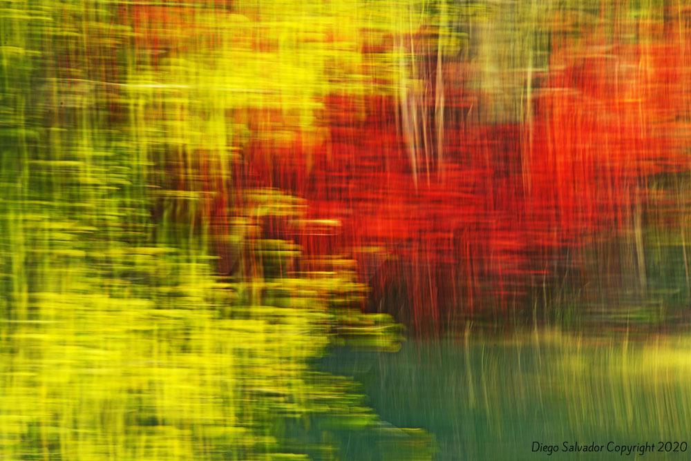 2015 - Fall's colors 4 - Diego Salvador