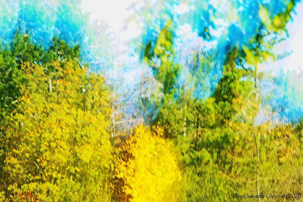 2015 - Fall's colors 5 - Diego Salvador