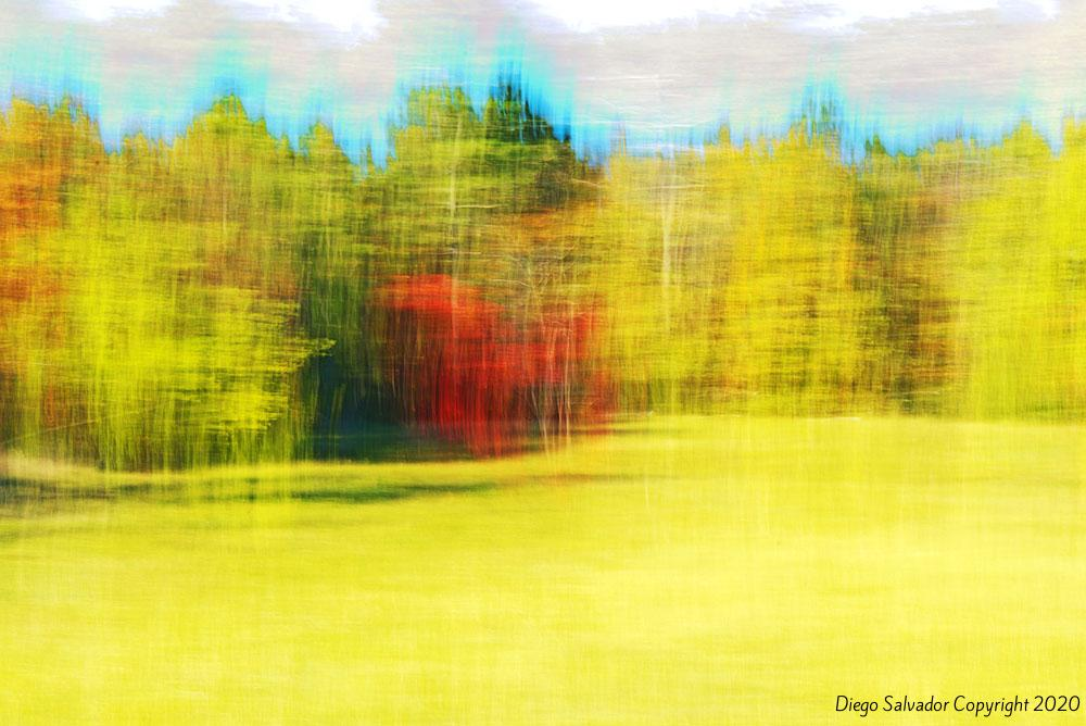2015 - Fall's colors 6 - Diego Salvador