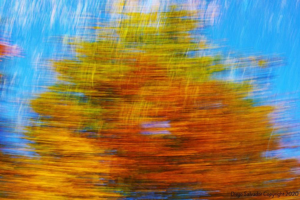2015 - Fall's colors 8 - Diego Salvador