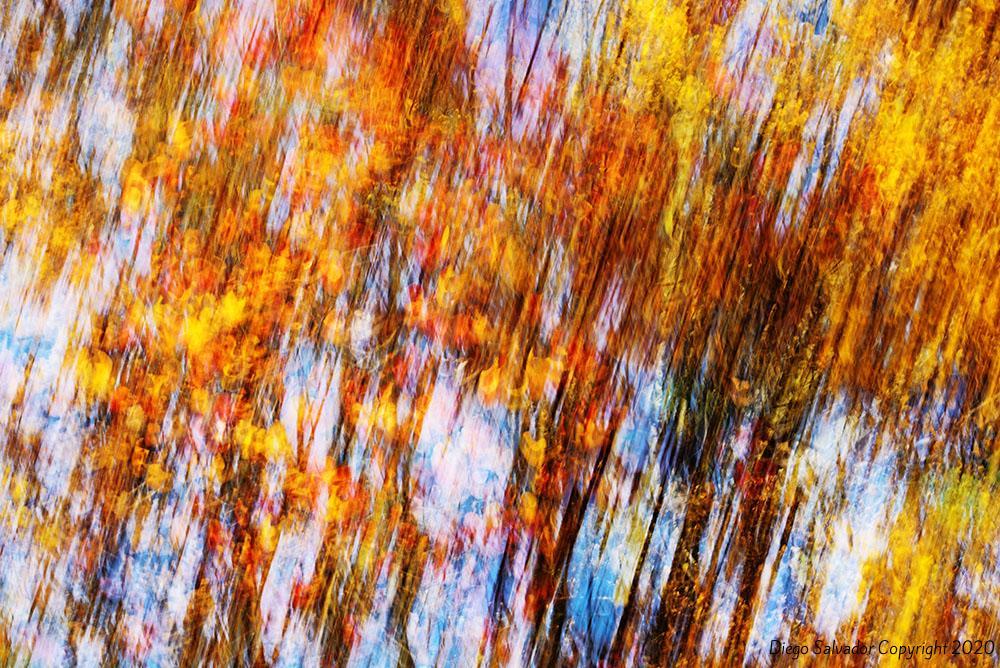 2015 - Fall's colors 14 - Diego Salvador