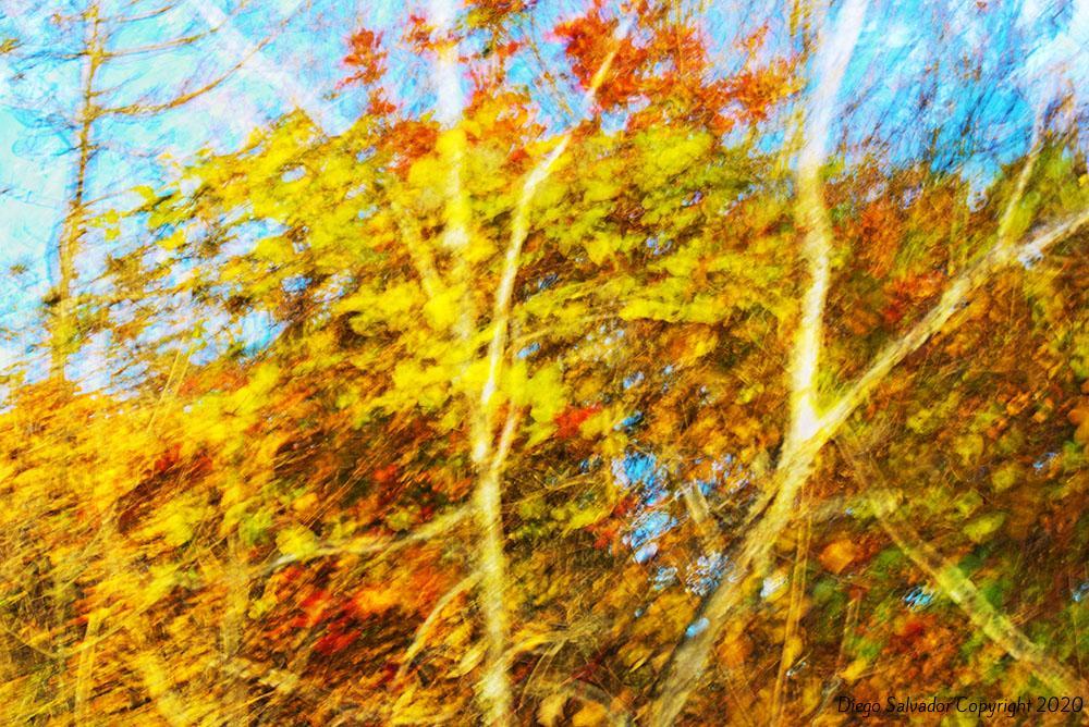 2015 - Fall's colors 15 - Diego Salvador